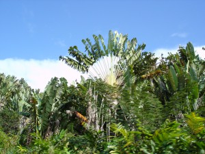 Madagascar_2005