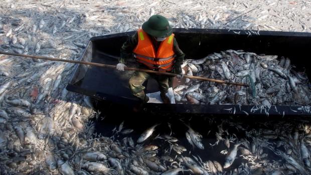 Vietnam_Formosa_poissons morts2