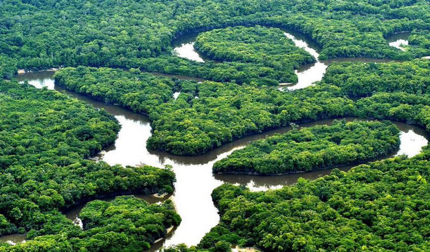 Amazonie : le poumon de la terre