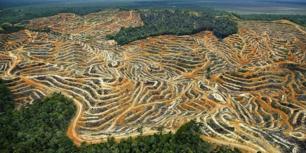 Cela se passera en 2019 ! Déforestation en Amazonie