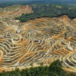 Amazonie_Déforestation