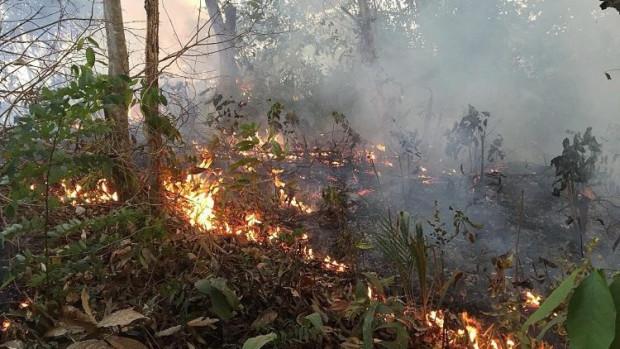 Amazonie_Incendies-2019
