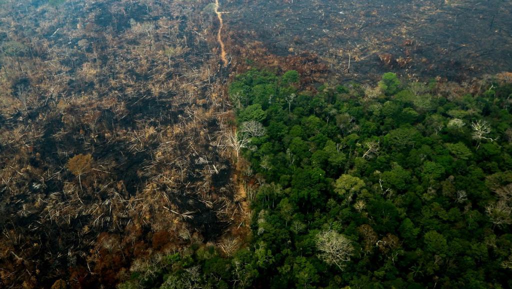 deforestation-amazonie. Amazonie brésilienne